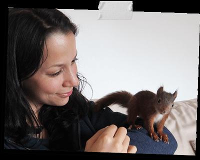Eichhörnchen Liebe